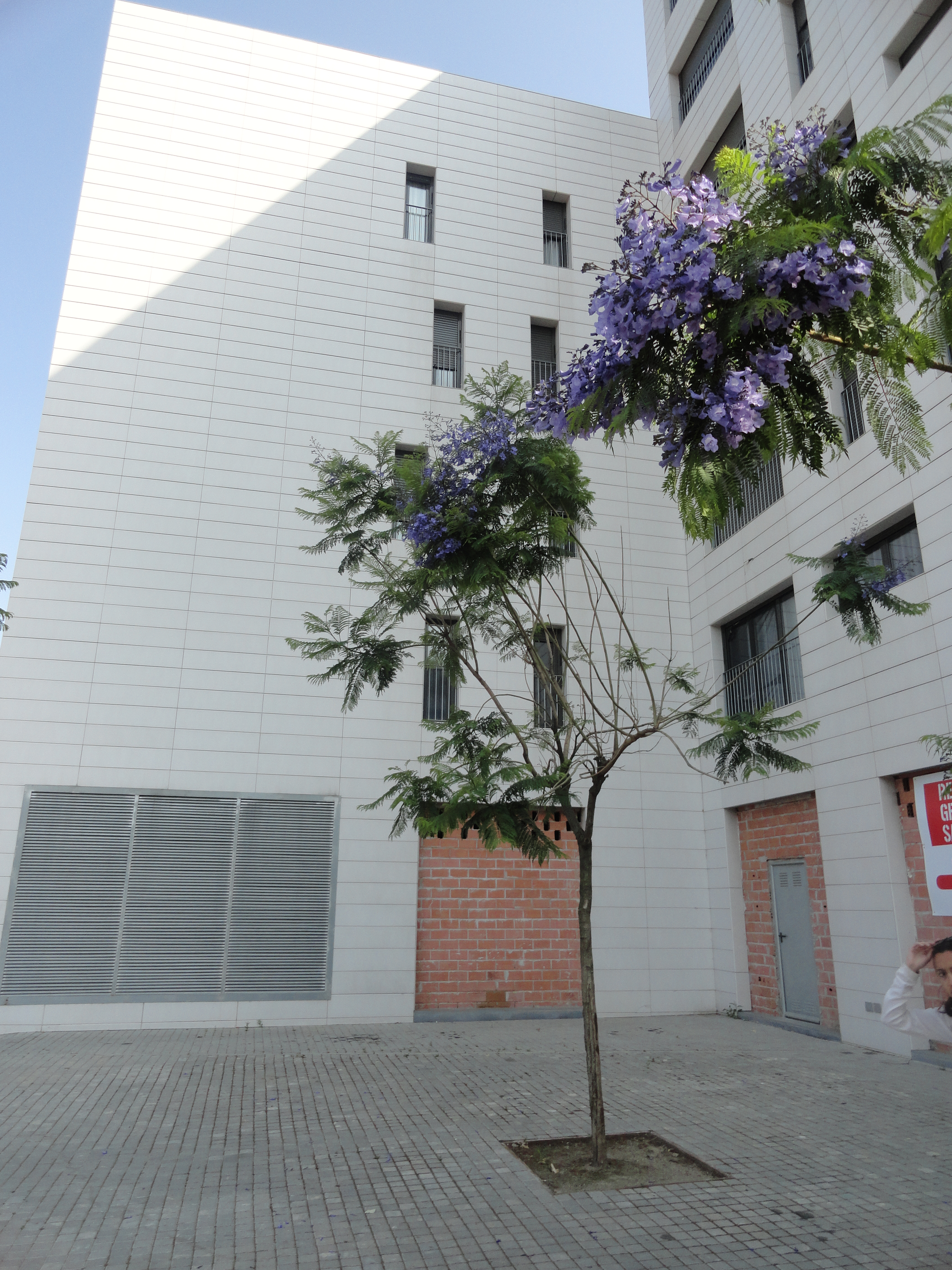Torre bar entre el sue o de la ciudad jard n y el giro for Barrio ciudad jardin madrid